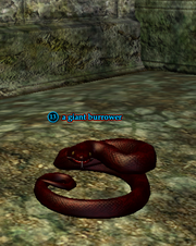 A giant burrower