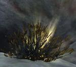 Daring Rescue (thawthorn)
