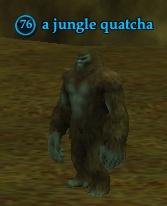A jungle quatcha