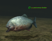 A carnivorous feeder