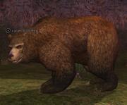 A giant wilderbear