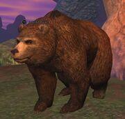 A wild bear