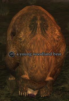 File:Young woodland bear.jpg