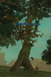 A desecrated vale sapling