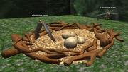 A hawk nest