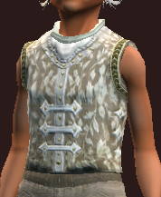 Arcane Sage's Vest (Equipped)