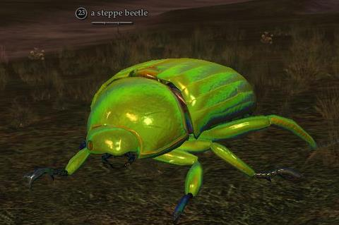 File:Steppe beetle.jpg