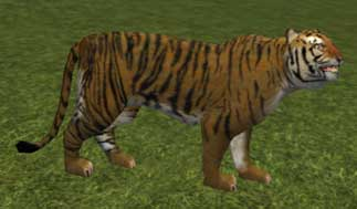 File:Race tiger.jpg