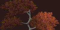 Russet Vesspyr Oak