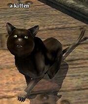 A kitten (NPC)