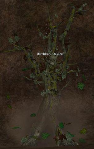 File:Birchbark Oakleaf.jpg