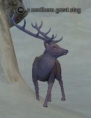 A northern great stag