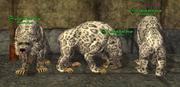 Dire Bear (Assassin) Placed