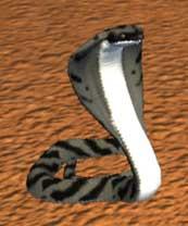Race cobra