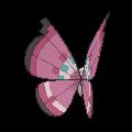 Imagen posterior de Vivillon variocolor en la sexta generación