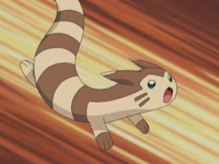 Archivo:EP329 Furret.png