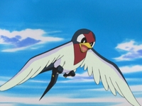 Archivo:EP333 Taillow.png