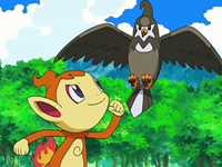 Archivo:EP544 Chimchar y Staravia.png