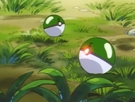 EP035 Safari Balls