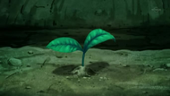 EP794 Cultivos volviendo a crecer