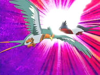 EP361 Swellow vs Swellow