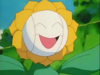 Archivo:EP137 Sunflora con cremas faciales.png