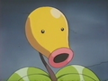 EP172 Bellsprout del anciano.png