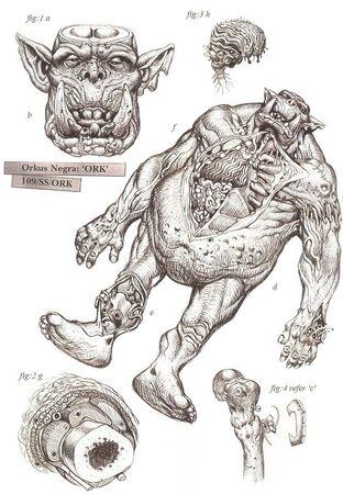 Orko fisiología wikihammer.jpg