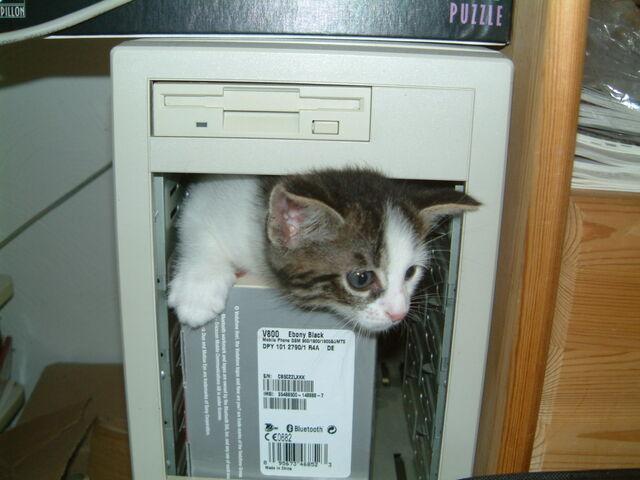 Archivo:Computer cat.jpg