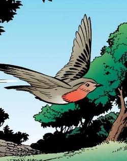 Cock Robin Wiki 36