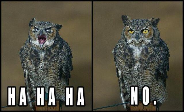 File:Hahaha No Owl.jpg