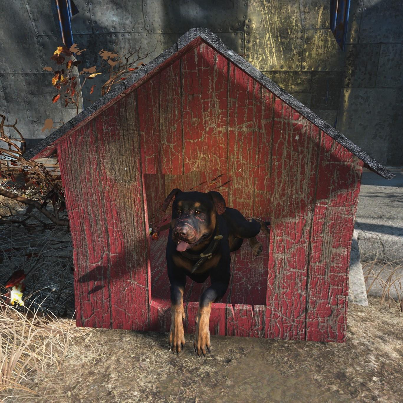 junkyard dog fallout wiki fandom powered by wikia