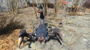 FO4 Radscorpion Stalker