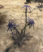 FO4 Thistle plant (disarmed)