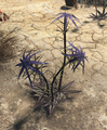 FO4 Thistle plant (disarmed).png