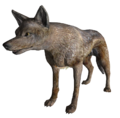 CoyoteFNV.png