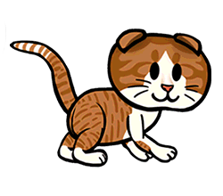 File:Scottish Fold.png