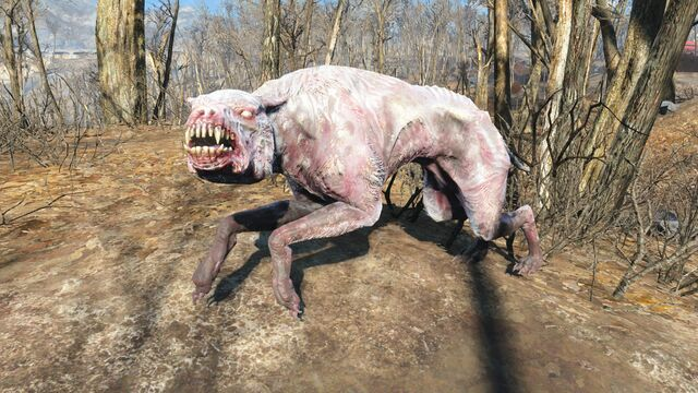 File:FO4 Albino mongrel.jpg