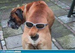 User Tezzla Dog