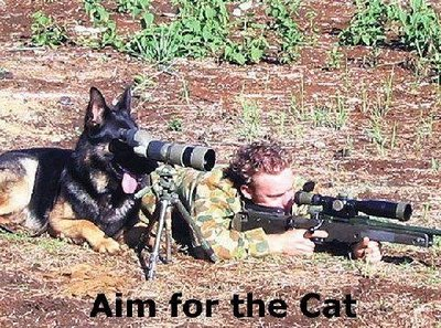 File:Cat-sniper.jpg
