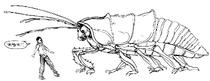 RoachorCA