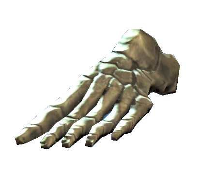 File:Left foot bones.png