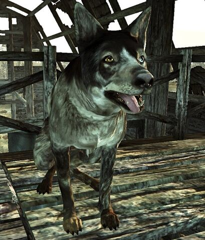 File:Scavenger's Dog.jpg