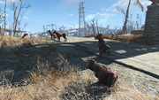 FO4 Pack of Wild Dogs