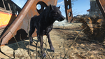 Fo4FH vicious wolf