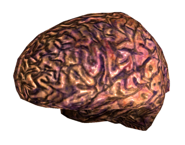 File:Your brain.png