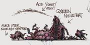 Queen Molerat