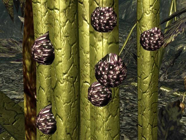 File:Punga seeds on Mother Punga.jpg