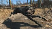 FO4 Alpha vicious mongrel