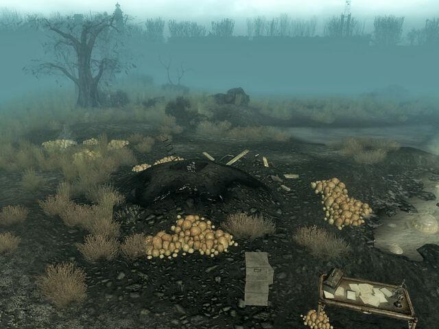 File:Excavated muck hole 2.jpg